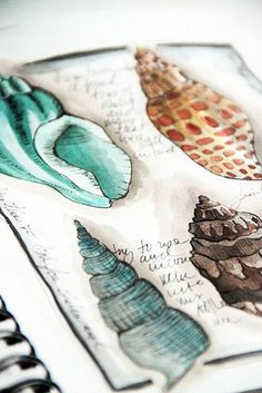 Alisa Burke Art Sketchbook with observational drawings of shells - developing ideas from natural Art Watercolor, Watercolor Journal, Watercolor Fashion, Art Sketches, Art Drawings, Beach Sketches, Alisa Burke, Observational Drawing, Art And Illustration