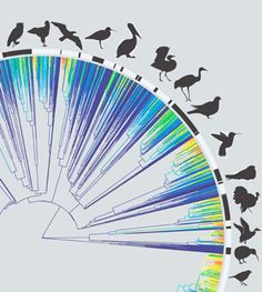 A team at Yale created a huge family tree for all living birds, showing fast diversification.