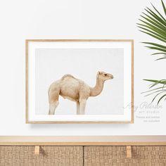 Baby Camel Print Camel Baby Wall Art Camel in Desert Animal   Etsy