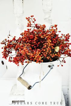 Fall Decoration Idea - Rosa arvensis in rustic white vintage milk can.
