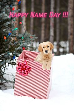42 Of The Cutest Christmas Puppies Dog Christmas Pictures, Christmas Puppy, Christmas Mood, Christmas Animals, Christmas Photo Cards, Christmas Presents For Pets, Xmas, Christmas Card Photo Ideas With Dog, Country Christmas