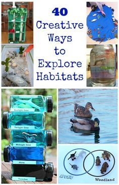 Creative ideas - shoebox, dioramas and more - for animal habitat projects! Ideas include ocean, desert, rain forest, arctic, forest and pond habitats - great for preschool, 1st, 2nd and 3rd grades!