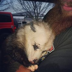 For the love of animals. Pass it on.Pregnant Opossum Clings To The People Who Saved Her Babies