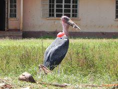 These birds are scary #Uganda