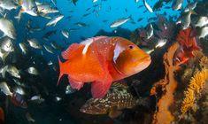 Ocean Ecosystem, Fish Stock, Marine Conservation, Underwater World, Predator, Dolphins, South Africa, Shark, Wildlife