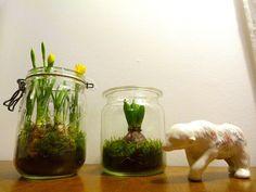 faire des mini jardins d'hiver dans des bocaux Deco Nature, Daycare Crafts, Land Art, Horticulture, Pretty Flowers, Glass Jars, Decoration, Indoor Plants, Terrarium
