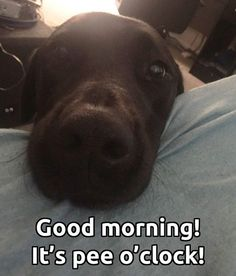 Lol. My Piper does this with a big, sweet kiss to my face every morning.