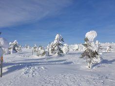 Vihreä-valkoiset havupuut reunustavat matkaa kohti Riisitunturin huippua. Riisitunturi, Posio. Mount Everest, Mountains, Nature, Travel, Outdoor, Outdoors, Naturaleza, Viajes, Destinations