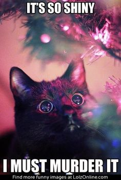 Funny cat on Christmas! Yep I have seen this every Christmas.