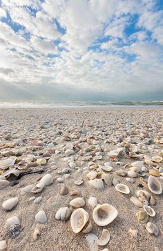 Henry Domke Fine Art Shell beach