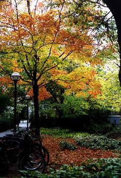 Fall Colors in Ann Arbor, Michigan...I hope your as lovely as this Picture next week Ann Arbor!?