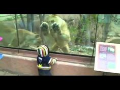 Zoo lion tries to eat a human baby...and yes it's funny.