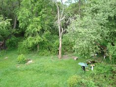 """If you look closely at the grass under the tree, you will see """"Little Sweetie"""", one of original """"Sweetie's descendent bunnies, and resident Squirrels """"Sam"""" and """"Samantha"""" who live at Rabbit Path Habitat year round. Its not unusual to see a squirrel, bunny, dove and woodchuck all hanging out together in one spot here."""