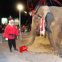 """At Santa's Enchanted Forest in Miami, even Dondi the elephant loves playing """"My First Piano"""""""