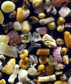 Lahaina Maui: Sand grains from Maui, Hawaii. Gary Greenberg photographs the world, one grain of sand at a time, in A Grain of Sand: Nature's Secret Wonder