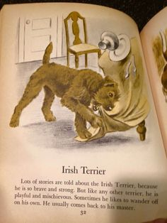 irish Terrier in am old book Cute Dogs Breeds, Cat Breeds, Wag The Dog, Scruffy Dogs, Scottish Deerhound, Irish Terrier, Irish Wolfhound, Irish Setter, Amazing Dogs