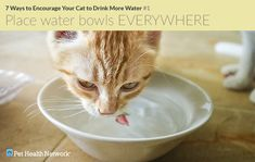 1 in 3 cats will experience kidney problems in their lifetimes and dehydration worsens kidney disease. With that in mind, here are 7 great ways to encourage your cat to drink more water.