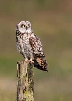 Plane Spotter Owl by Lea Roberts, via 500px