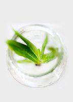 Am besten ganz frisch trinken: Aloe Vera Saft