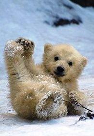 Topsy Turvy Polar Bear <3