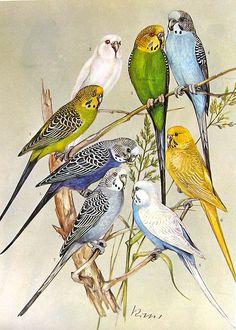 Birds 1972 Encyclopedia Print | Flickr - Photo Sharing!