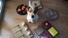 Scopri come giocare con il tuo Jack Russell terrier: giochi di fiuto, attivazione mentale, tira e molla, scambio... tanti giochi per divertirti con lui.