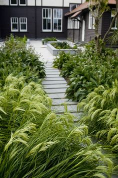 nz native garden design ideas - modern home interior design Outdoor Landscaping, Front Yard Landscaping, Outdoor Gardens, Landscaping Ideas, Garden Ideas Nz, Garden Inspiration, Coastal Gardens, Tropical Gardens, Garden Landscape Design