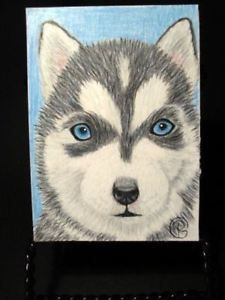 Aceo Husky Dog Puppy Original Pet Art Ebay Color Pencil Art