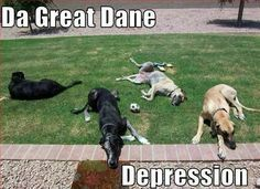Gift Card Insert Cute Great Dane Puppy Dog Refrigerator Tool Box Magnet