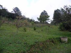 (2) Terrenos à Venda en Belchior 1 - Juquitiba - Grande São Paulo - São Paulo - MercadoLibre
