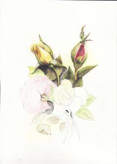 Water Color Pencil Roses Tutorial - Step by Step - Total Art Soul - Forum