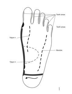 reflexology vagus nerve stimulation - Google Search