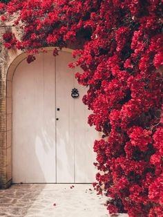 MALTA DOORS Fauna and Flora are two terms frequently heard by people who spend time in nature. Flower Background Wallpaper, Flower Phone Wallpaper, Flower Backgrounds, Photo Backgrounds, Wallpaper Backgrounds, Aesthetic Backgrounds, Aesthetic Iphone Wallpaper, Aesthetic Wallpapers, Flower Aesthetic
