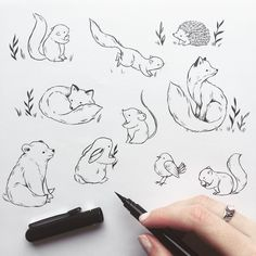 Woodland critters illustration, brush pen, lines, … – – tiere Woodland Critters, Woodland Creatures, Woodland Animals, Woodland Art, Cute Drawings, Drawing Sketches, Amazing Drawings, Easy Animal Drawings, Ink Drawings