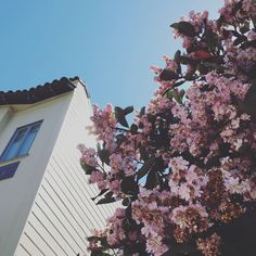 PINK SPRING  #SanFrancisco #California