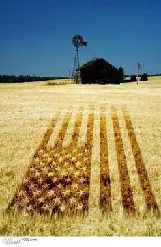 Amber waves of grain. | #myfreedommyfamily