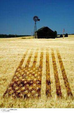 Amber waves of grain. | #myfreedommyfamily