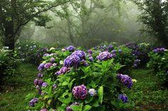 Уникальная красота и безграничное многообразие цветочного мира - Ярмарка Мастеров - ручная работа, handmade