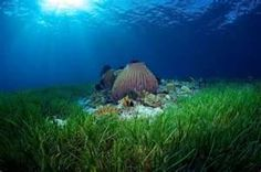 scenery in shallows