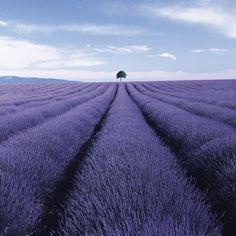 Charlie Waite - Valensole, Provence