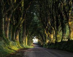 Bridestowe, Devon