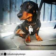 Have you seen this missing dog in Barwon Heads?  #Repost @kiitoslivingbydesign  Our beloved Obie is missing from the corner of Geelong Rd and Golf Links Rd Barwon Heads We're  besides ourselves with worry. Please help us find him $1000.00 REWARD offered #help #missingdog #dog #reward Contact phone number is on collar #mylostpet  #aguideto #aguidetobarwonheads #barwonheadscafes #barwonheadsshops #barwonheadscoffee #smallbusiness #shoplocal #livelovelocal  #photography #ocean #beach…