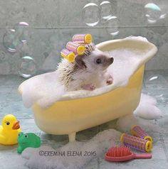 The Secret Life Of Hedgehogs By Elena Eremina #hedgehog #cute #bathroom #bath #tub #bathtub