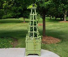 Cedar Topiary Form GDAC204