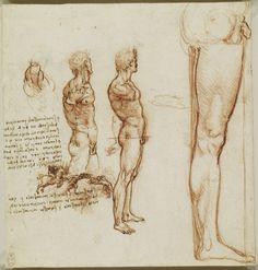 Анатомические рисунки Леонардо да Винчи в оцифрованном виде - 6