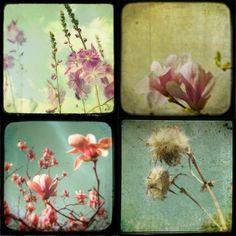 Items similar to 30% OFF, Art collection Flower photos feminine metallic photo olive green honeysuckle pink spring girly Set of 4 5x5 Metal Photos Softness on Etsy. , via Etsy.