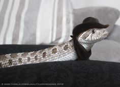 littleprincesnek:  When I hear the name 'Western' Hognose, all I can think of is this…Please do not remove my copyright notice!
