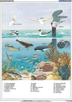 Przyroda Montessori Homeschool, Montessori Activities, Perspective Art, Science And Nature, Poland, Signage, Ocean, France, Education