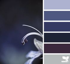 Ideas bathroom themes purple design seeds for 2019 Colour Schemes, Color Combos, Color Patterns, Color Palate, Design Seeds, Deco Design, Color Swatches, Color Stories, Color Theory