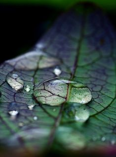 (ART: WATER CHANGES EVERYTHING)-  What differences do you see in the details of the leaf, under the drops of water?